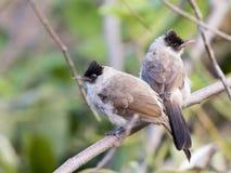 两只鸟的图象在狂放的分支栖息 免版税库存图片