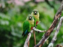 两只鸟等待在雨中 库存照片