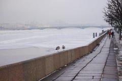 两只鸥在宫殿堤防的perapet附近走 免版税图库摄影