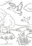 两只鸭子飞行在湖下 湖在森林里 图库摄影