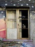 两只鸽子在一个老色的房子的一个疾病窗口里 库存照片
