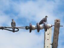 两只鸽子坐电子电缆 免版税库存图片