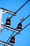 两只鸽子鸟在与cleary蓝天,垂直的射击的电缆导线站立 库存照片