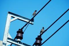 两只鸽子鸟在与cleary蓝天,水平的射击第2射击的电缆导线站立 库存照片