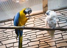 两只鹦鹉坐一个分支在动物园里 库存图片