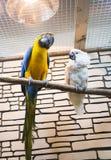 两只鹦鹉坐一个分支在动物园里 免版税库存图片