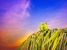 两只鹦鹉结合坐在晚上时间的棕榈树 免版税库存照片