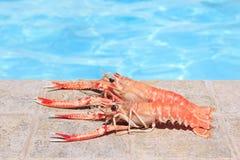 两只龙虾临近游泳池 库存图片