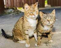两只滑稽的富感情的街道猫 免版税库存图片