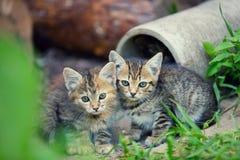 两只离群小的小猫 免版税库存图片