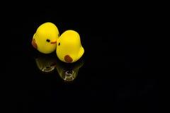 两只黄色小鸡亲吻 免版税库存图片