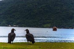 两只黑雕和小船 免版税库存照片