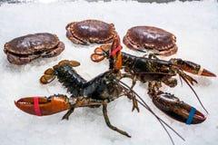 两只活龙虾和三个螃蟹 免版税库存照片