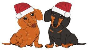 两只differents达克斯猎犬 免版税图库摄影