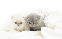 两可爱的小猫 库存图片