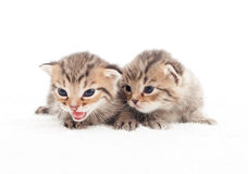 两可爱的小猫 图库摄影