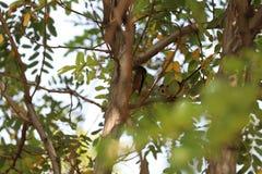 两吃歌曲鸟的小棕色蚂蚁 免版税图库摄影