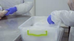 两名工作者包装新鲜的未加工的鸭子肉入真空包装 影视素材