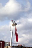 两在小船帆柱的海鸥与土耳其旗子 免版税图库摄影