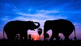 两在暮色时间的大象 库存照片