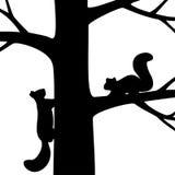 两在树的灰鼠。 免版税库存照片
