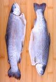 两在竹切板的整个新鲜的鳟鱼 免版税库存图片