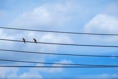 两在缆绳电线的鸟 鸟被栖息的鸠身分  免版税库存图片