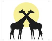两在黄色太阳背景的长颈鹿  免版税库存图片
