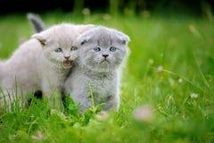 两在绿草的逗人喜爱的小猫 库存照片