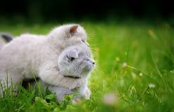 两在绿草的逗人喜爱的小猫 库存图片