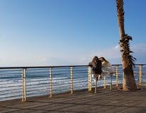 两坐在巴特亚姆,以色列新的散步的少妇  图库摄影