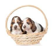 两坐在篮子的小狗 背景查出的白色 免版税库存图片