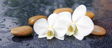 两块兰花花和温泉石头 免版税库存照片