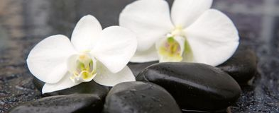 两块兰花花和石头 背景蜡烛开花温泉毛巾黄色 库存照片