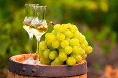 两块玻璃白葡萄酒和葡萄在葡萄背景荡桨 库存照片