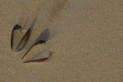 两壳以心脏的形式在海滩的 免版税库存照片