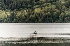 两对河夫妇Canada安大略湖在独木舟的在水阿尔根金族国家公园乘独木舟 免版税库存照片