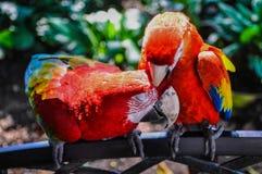 两对爱情鸟 免版税图库摄影