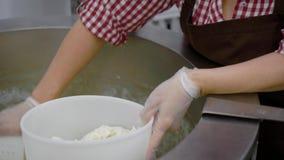 两小乳酪厂的女工从金属碗机器得到乳酪大量并且形成乳酪头 影视素材