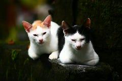 两小猫 免版税库存照片