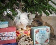 两小的兔子坐在圣诞树下 免版税库存照片
