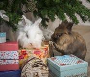 两小的兔子坐在圣诞树下 库存图片