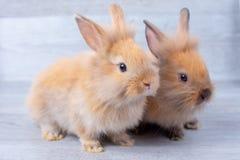 两小的小兔在用不同的位置的灰色木样式背景停留 库存图片