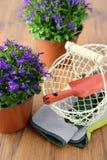 两山梗菜花盆在与从事园艺的木桌上开花 免版税库存图片