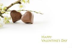 两巧克力心脏和开花的分支隔绝与阴影 图库摄影