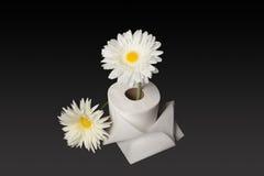 两张新鲜的雏菊和卫生纸 库存图片