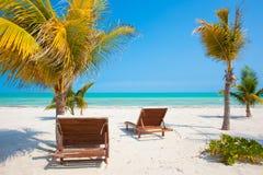两张海滩睡椅临近在热带的棕榈树 免版税库存照片