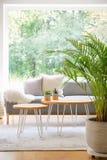 两张簪子桌用站立在明亮的每日室内部的地毯的仙人掌与新鲜的植物、窗口和灰色沙发在真正 库存照片