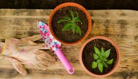 两张花盆、庭院铁锹和运作的手套 图库摄影