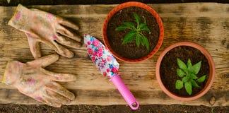 两张花盆、庭院铁锹和运作的手套 免版税库存照片